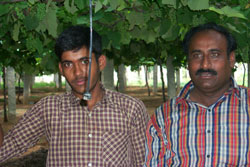 Farmer Jayashankar and his son use the hanging pipe to water their crop of grapes. This drip irrigation method has enabled Jayas