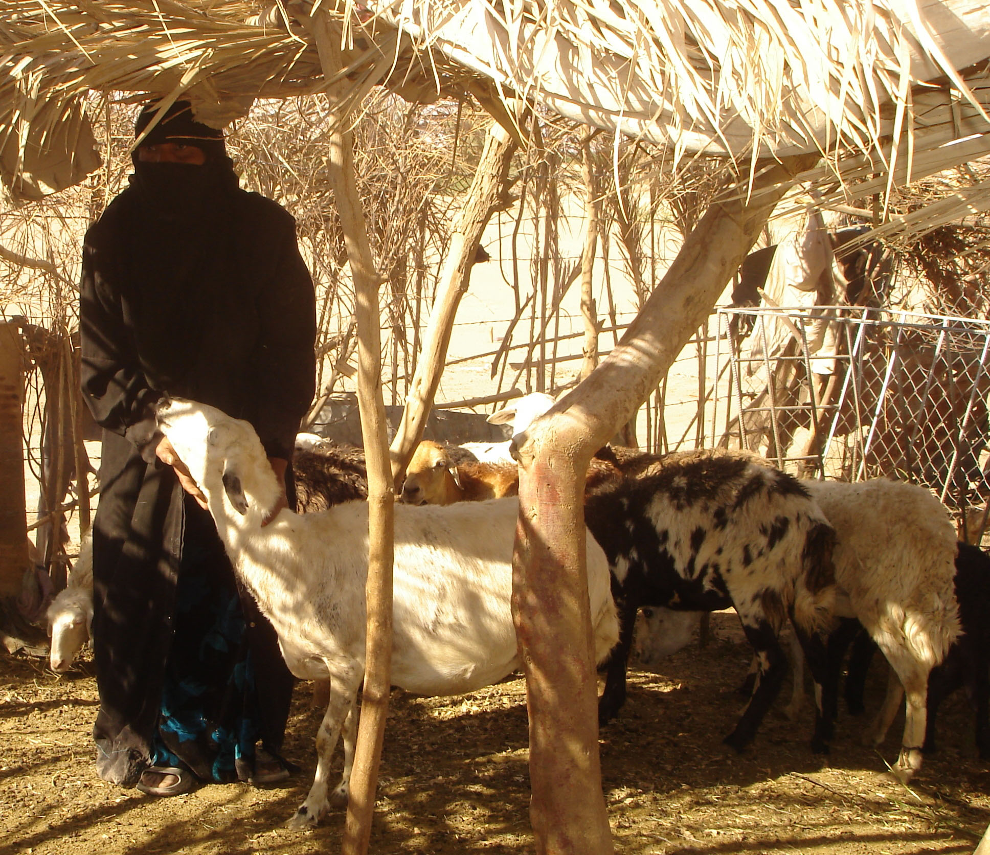 A participant in a USAID-coordinated training on basic animal health care, hygiene and husbandry, Aminah Ghalib Mofhel now earns