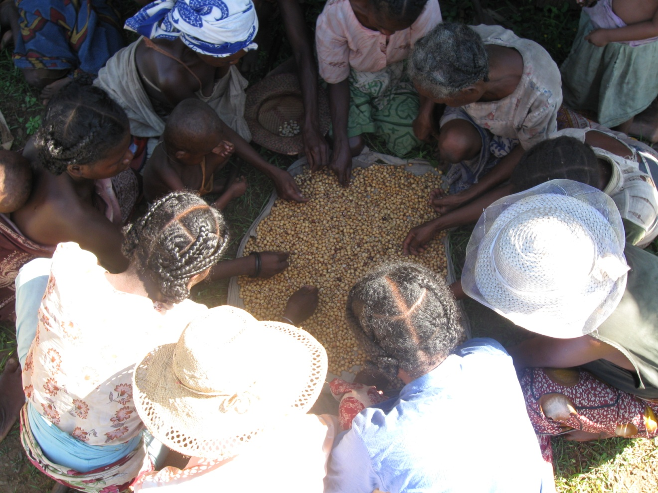 Women gather around seeds. Credit: USAID