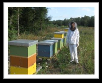 "Zorica Mekic of Sekovici learned beekeeping through USAID's ""Women's Empowerment Through Farming"" Project."