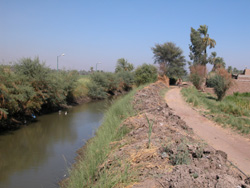 The El-Goda canal is cleaner and flows freely, now that residents no longer dump sewage and garbage into it.